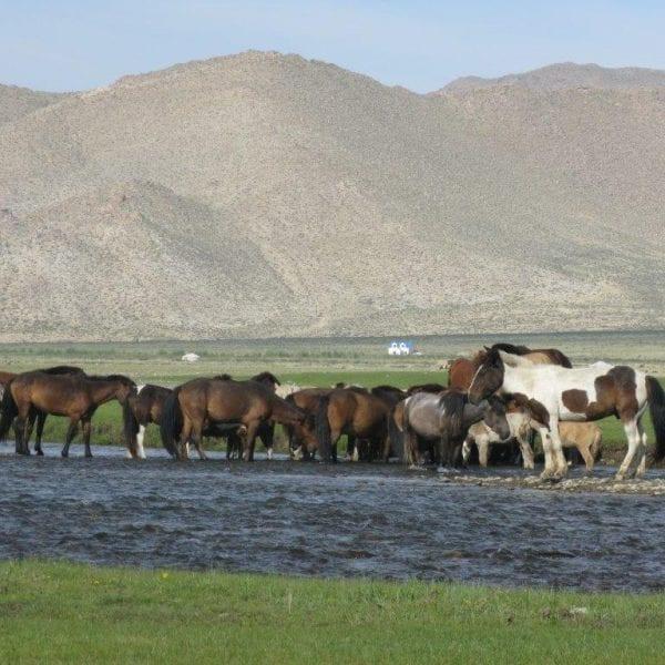 Vayana Josefine in der Mongolei - Aufnahme der mongolischen Steppe mit Pferden